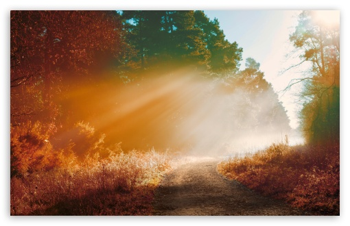 Download Misty Forest Road, Autumn HD Wallpaper
