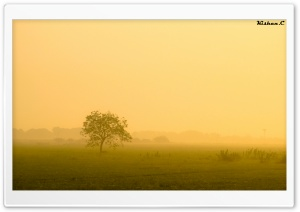 Misty Morning. HD Wide Wallpaper for Widescreen