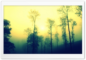 Misty Morning HD Wide Wallpaper for Widescreen