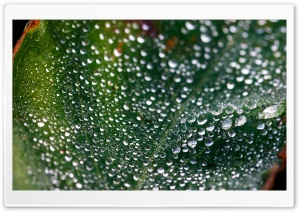 Misty Morning Dew HD Wide Wallpaper for Widescreen