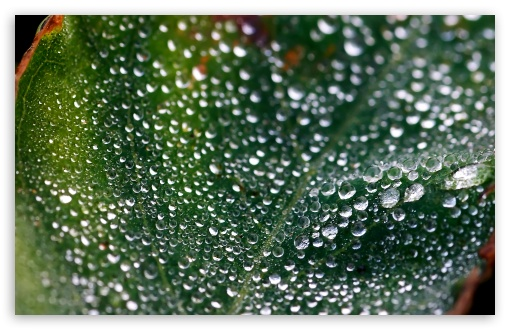 Misty Morning Dew HD wallpaper for Wide 16:10 5:3 Widescreen WHXGA WQXGA WUXGA WXGA WGA ; HD 16:9 High Definition WQHD QWXGA 1080p 900p 720p QHD nHD ; Standard 4:3 5:4 3:2 Fullscreen UXGA XGA SVGA QSXGA SXGA DVGA HVGA HQVGA devices ( Apple PowerBook G4 iPhone 4 3G 3GS iPod Touch ) ; Tablet 1:1 ; iPad 1/2/Mini ; Mobile 4:3 5:3 3:2 16:9 5:4 - UXGA XGA SVGA WGA DVGA HVGA HQVGA devices ( Apple PowerBook G4 iPhone 4 3G 3GS iPod Touch ) WQHD QWXGA 1080p 900p 720p QHD nHD QSXGA SXGA ;