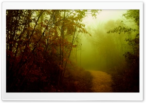 Misty Path HD Wide Wallpaper for Widescreen