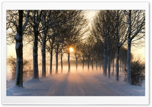 Misty Winter Afternoon HD Wide Wallpaper for 4K UHD Widescreen desktop & smartphone