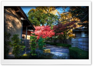 Momiji Behind Tea House HD Wide Wallpaper for Widescreen