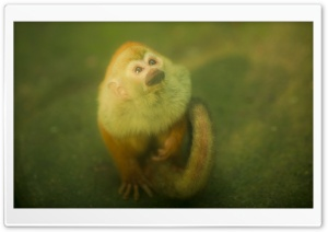 Monkey HD Wide Wallpaper for Widescreen