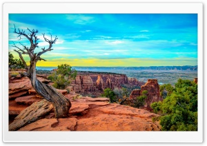 Monument Canyon Colorado Tree HD Wide Wallpaper for Widescreen
