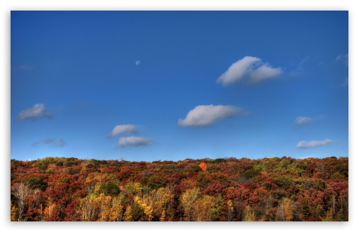 Moon Over Autumn HD wallpaper for Wide 16:10 5:3 Widescreen WHXGA WQXGA WUXGA WXGA WGA ; HD 16:9 High Definition WQHD QWXGA 1080p 900p 720p QHD nHD ; UHD 16:9 WQHD QWXGA 1080p 900p 720p QHD nHD ; Standard 4:3 5:4 3:2 Fullscreen UXGA XGA SVGA QSXGA SXGA DVGA HVGA HQVGA devices ( Apple PowerBook G4 iPhone 4 3G 3GS iPod Touch ) ; Tablet 1:1 ; iPad 1/2/Mini ; Mobile 4:3 5:3 3:2 16:9 5:4 - UXGA XGA SVGA WGA DVGA HVGA HQVGA devices ( Apple PowerBook G4 iPhone 4 3G 3GS iPod Touch ) WQHD QWXGA 1080p 900p 720p QHD nHD QSXGA SXGA ; Dual 16:10 5:3 16:9 4:3 5:4 WHXGA WQXGA WUXGA WXGA WGA WQHD QWXGA 1080p 900p 720p QHD nHD UXGA XGA SVGA QSXGA SXGA ;