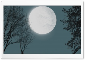Moon With Tree Silhouettes HD Wide Wallpaper for Widescreen