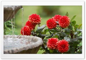 Moril-Dahlias and Water Fountain HD Wide Wallpaper for Widescreen