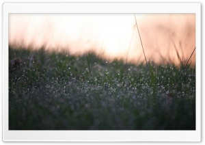 Morning Dew HD Wide Wallpaper for Widescreen
