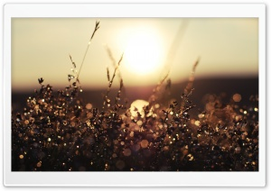 Morning Dew Bokeh HD Wide Wallpaper for Widescreen