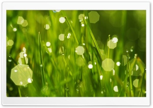 Morning Dew, Bokeh HD Wide Wallpaper for Widescreen