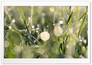 Morning Dew Bokeh HD Wide Wallpaper for 4K UHD Widescreen desktop & smartphone