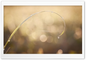 Morning Dew Drops HD Wide Wallpaper for Widescreen