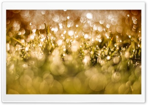 Morning Dew Drops On Grass HD Wide Wallpaper for Widescreen