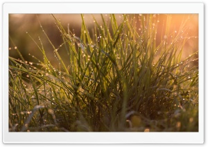 Morning Dew Drops on Grass Ultra HD Wallpaper for 4K UHD Widescreen desktop, tablet & smartphone