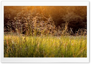 Morning Dew Grass HD Wide Wallpaper for Widescreen