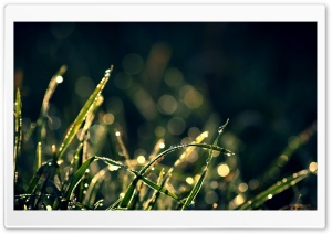 Morning Dew In Sunlight HD Wide Wallpaper for Widescreen