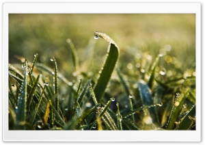 Morning Dew Macro HD Wide Wallpaper for Widescreen