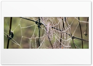 Morning Dew On Spider Web HD Wide Wallpaper for Widescreen