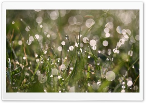 Morning Dew, Summer HD Wide Wallpaper for Widescreen