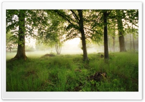 Morning Fog HD Wide Wallpaper for Widescreen