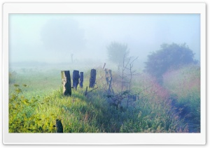 Morning Fog In The Field HD Wide Wallpaper for Widescreen