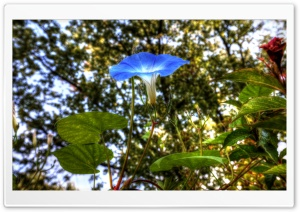 Morning Glory HDR HD Wide Wallpaper for Widescreen