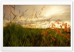 Morning Grass HD Wide Wallpaper for Widescreen