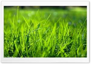 Morning Grass HD Wide Wallpaper for 4K UHD Widescreen desktop & smartphone