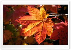 Morning Leaf HD Wide Wallpaper for 4K UHD Widescreen desktop & smartphone