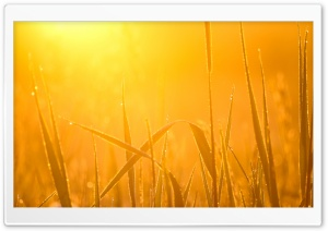 Morning light HD Wide Wallpaper for Widescreen
