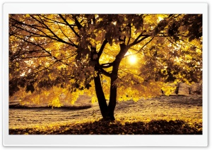 Morning Light In Autumn HD Wide Wallpaper for Widescreen