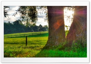Morning Light, Summer HD Wide Wallpaper for Widescreen