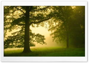 Morning Mist HD Wide Wallpaper for Widescreen