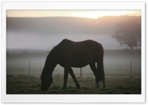 Morning Mist Horse HD Wide Wallpaper for Widescreen