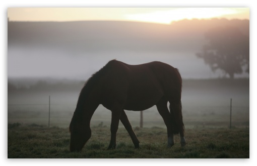 Morning Mist Horse HD wallpaper for Wide 16:10 5:3 Widescreen WHXGA WQXGA WUXGA WXGA WGA ; HD 16:9 High Definition WQHD QWXGA 1080p 900p 720p QHD nHD ; Standard 4:3 5:4 3:2 Fullscreen UXGA XGA SVGA QSXGA SXGA DVGA HVGA HQVGA devices ( Apple PowerBook G4 iPhone 4 3G 3GS iPod Touch ) ; Tablet 1:1 ; iPad 1/2/Mini ; Mobile 4:3 5:3 3:2 16:9 5:4 - UXGA XGA SVGA WGA DVGA HVGA HQVGA devices ( Apple PowerBook G4 iPhone 4 3G 3GS iPod Touch ) WQHD QWXGA 1080p 900p 720p QHD nHD QSXGA SXGA ;