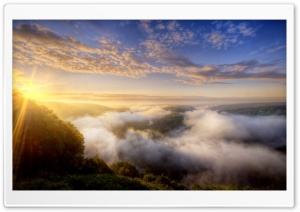 Morning Mist Over The Forest HD Wide Wallpaper for Widescreen