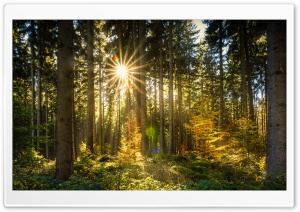 Morning Sun Rays Forest HD Wide Wallpaper for 4K UHD Widescreen desktop & smartphone