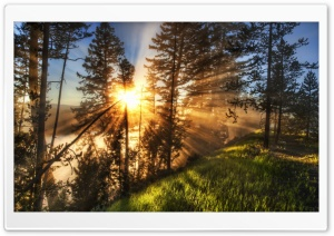 Morning Sunbeams HD Wide Wallpaper for Widescreen