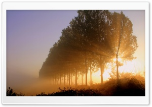 Morning Sunlight HD Wide Wallpaper for Widescreen