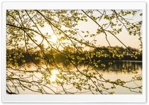 Morning Sunshine, Spring, Tree Branches, Lake HD Wide Wallpaper for 4K UHD Widescreen desktop & smartphone