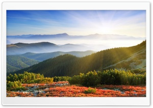 Morning Sunshine With Fog HD Wide Wallpaper for 4K UHD Widescreen desktop & smartphone