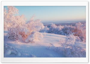Morning Winter Light HD Wide Wallpaper for Widescreen