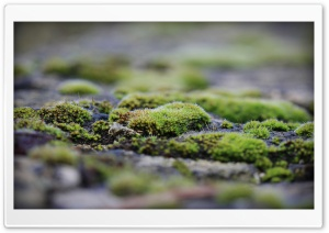 Moss HD Wide Wallpaper for Widescreen