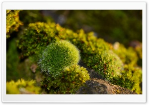 Moss HD Wide Wallpaper for 4K UHD Widescreen desktop & smartphone