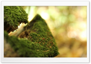 Moss Bokeh HD Wide Wallpaper for Widescreen