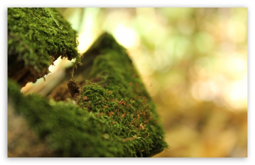 Moss Bokeh HD wallpaper for Wide 16:10 5:3 Widescreen WHXGA WQXGA WUXGA WXGA WGA ; HD 16:9 High Definition WQHD QWXGA 1080p 900p 720p QHD nHD ; UHD 16:9 WQHD QWXGA 1080p 900p 720p QHD nHD ; Standard 4:3 5:4 3:2 Fullscreen UXGA XGA SVGA QSXGA SXGA DVGA HVGA HQVGA devices ( Apple PowerBook G4 iPhone 4 3G 3GS iPod Touch ) ; Tablet 1:1 ; iPad 1/2/Mini ; Mobile 4:3 5:3 3:2 16:9 5:4 - UXGA XGA SVGA WGA DVGA HVGA HQVGA devices ( Apple PowerBook G4 iPhone 4 3G 3GS iPod Touch ) WQHD QWXGA 1080p 900p 720p QHD nHD QSXGA SXGA ;
