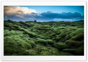Moss covered Lava fields, Iceland HD Wide Wallpaper for Widescreen