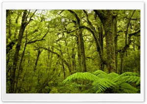 Moss Covered Trees, Forest HD Wide Wallpaper for 4K UHD Widescreen desktop & smartphone
